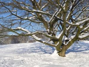 Welches Feldbett für die kalte Jahreszeit im Winter?