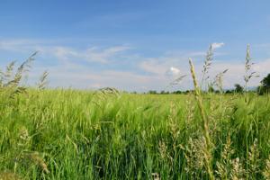Feldbett im Frühjahr