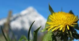 Feldbett im Frühling